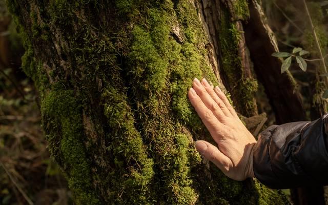 Week-end sylvothérapie et immersion en forêt
