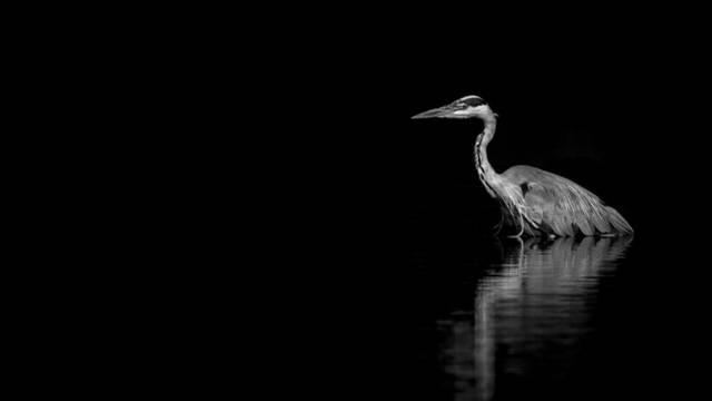"""6 août : conférence """"Nature en noire et blanc"""" d'Emmanuel Tardy"""
