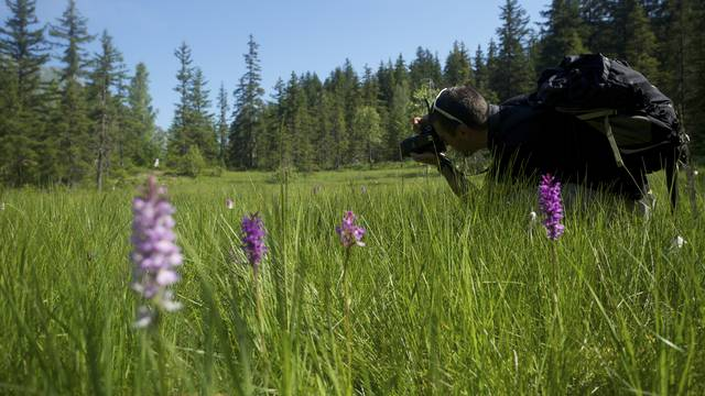 Sorties nature avec un accompagnateur en moyenne montagne