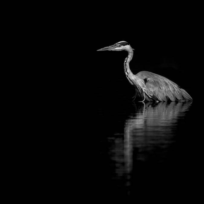 Reflect © Emmanuel Tardy